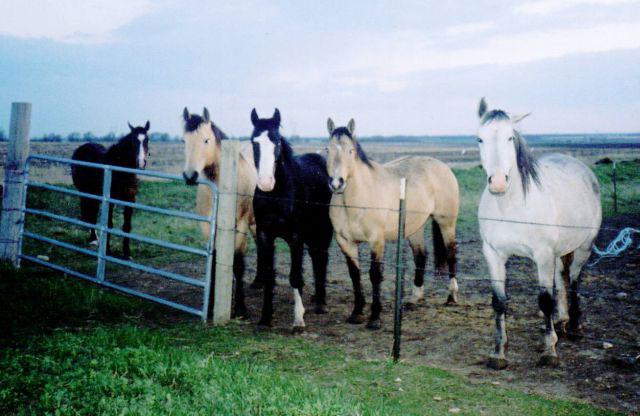 Sara's Horses