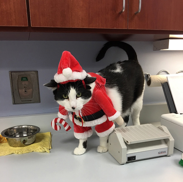 Snoopy, our Clinic Cat