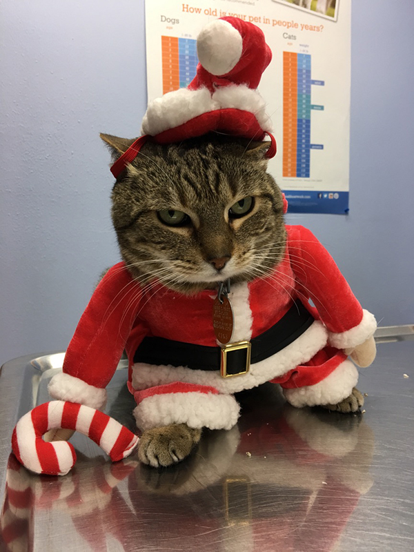 Wheezy, our Clinic Cat